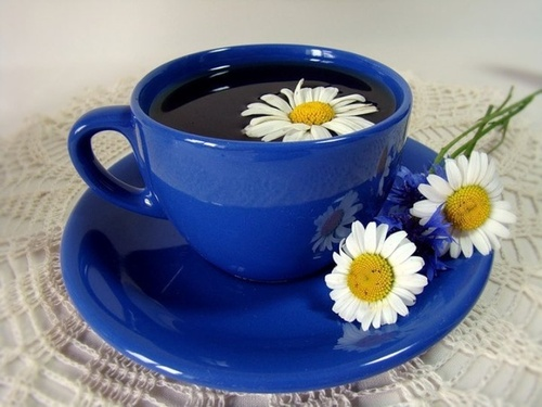 tea, cup, daisy, flower, blue