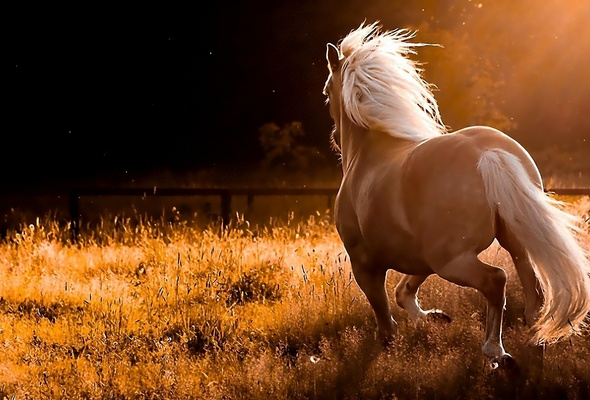 the horse, sports, outdoors