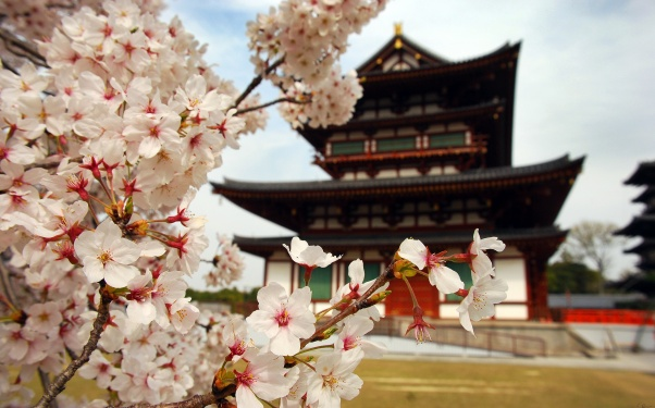 town house, flowers, japan, hut