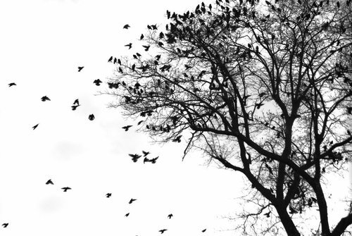 tree, birds, black