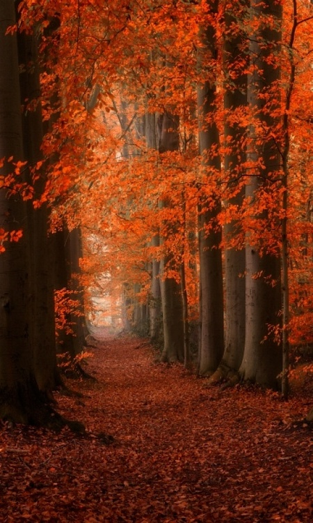 autumn, color, fall, forest, leaves, nature, photography, trees