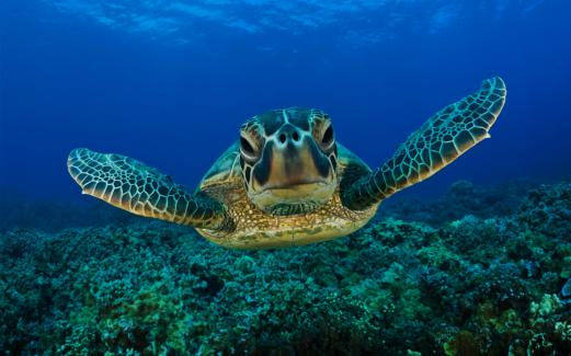 turtle, the sea, the bottom of the ocean