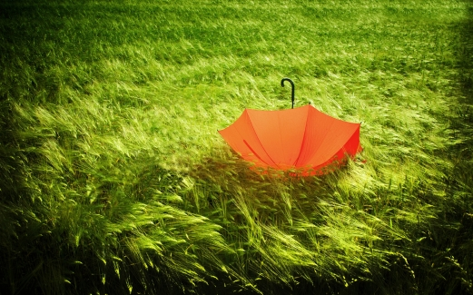 umbrella, grass, field, greens