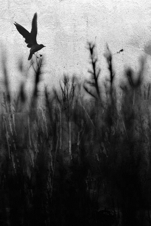 vintage, black and white, nature, bird, animal