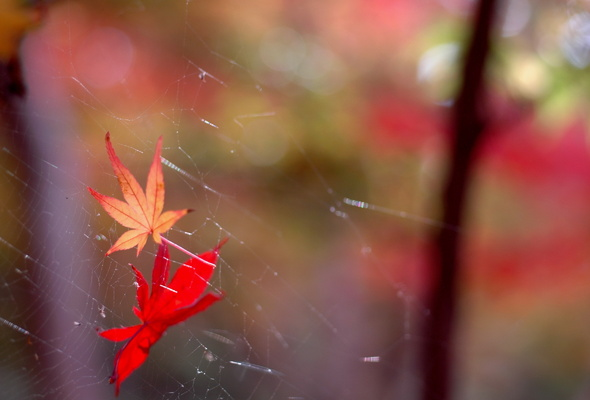 wide web, the nature, of the leaves
