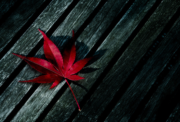 leaf, red, wood
