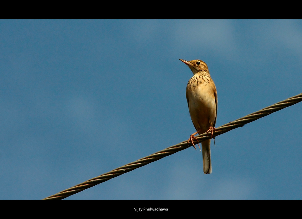 Bird, Observe, Wire, blue sky