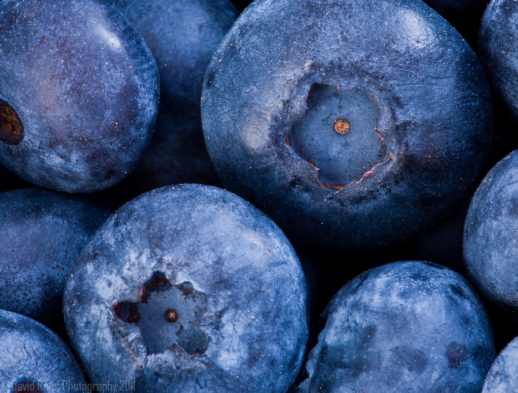 Blueberry, Macro, Fruit, Nikon
