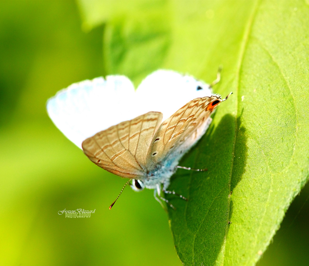 Butterfly, Wings, Nature, Canon