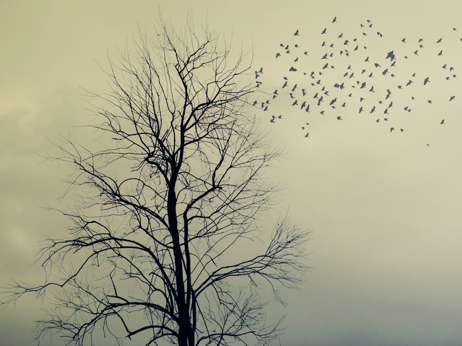 creepy, tree, texture, birds
