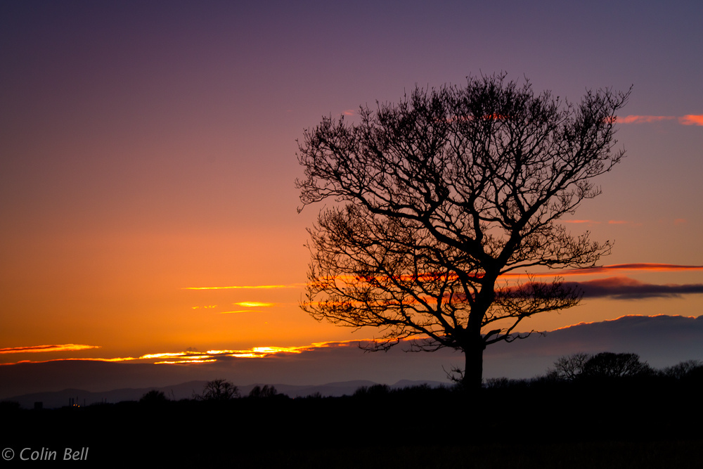 Cronton, sunset, tree, wales