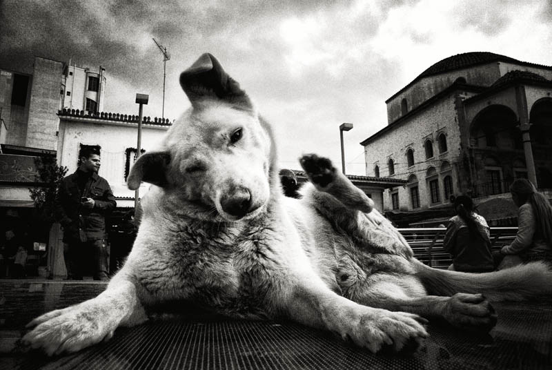 dog, street, bw, people