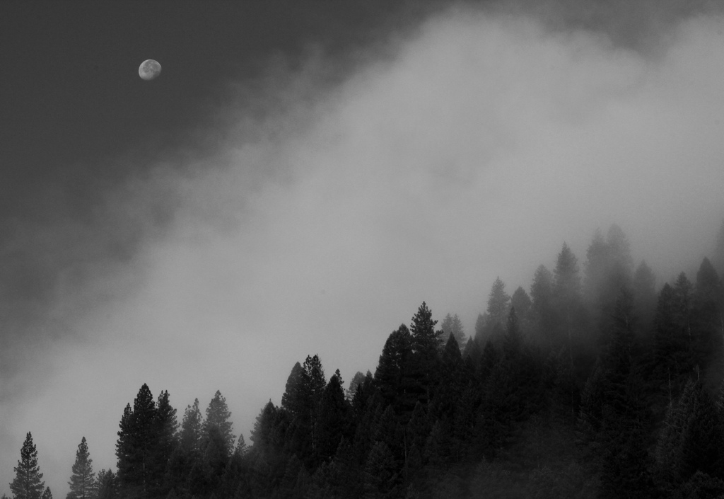 Downieville, Tahoe National Forest, La Luna, Black and White
