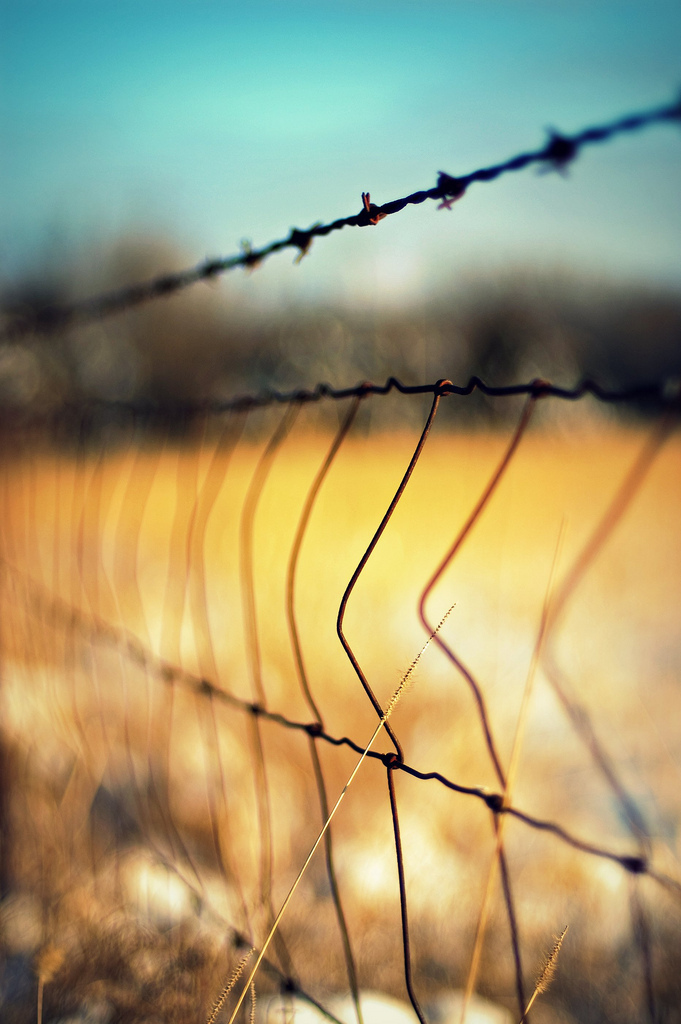 fence, snow, grass, DoF