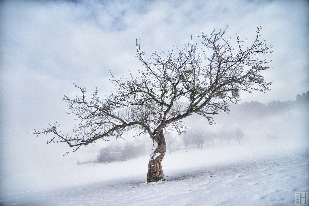 landscape, tree, winter, mist