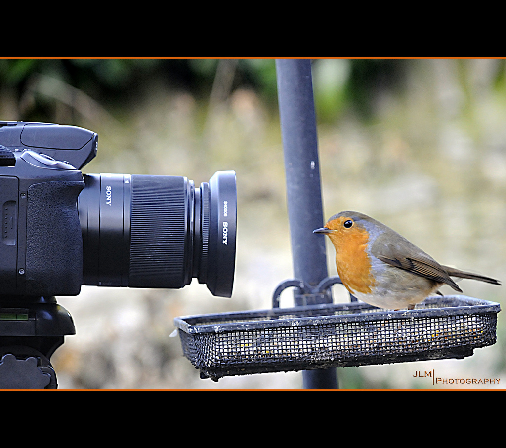 Our Daily Challenge, Watch the birdie, Robin, Camera