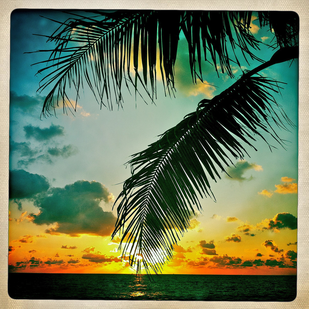 palm, tree, sunrise, clouds