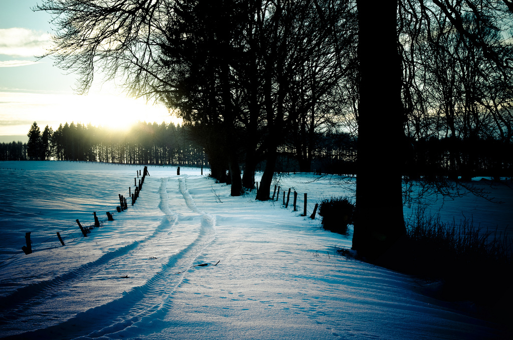 Path, Snow, Winter, Sun
