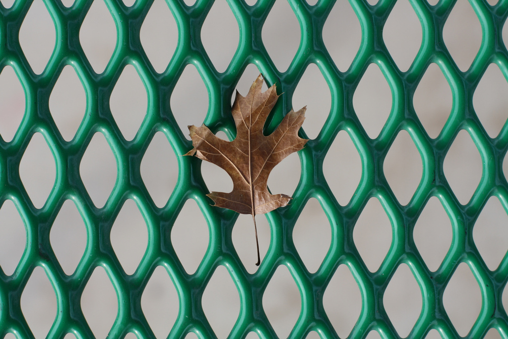 brown, green, leaf and pattern