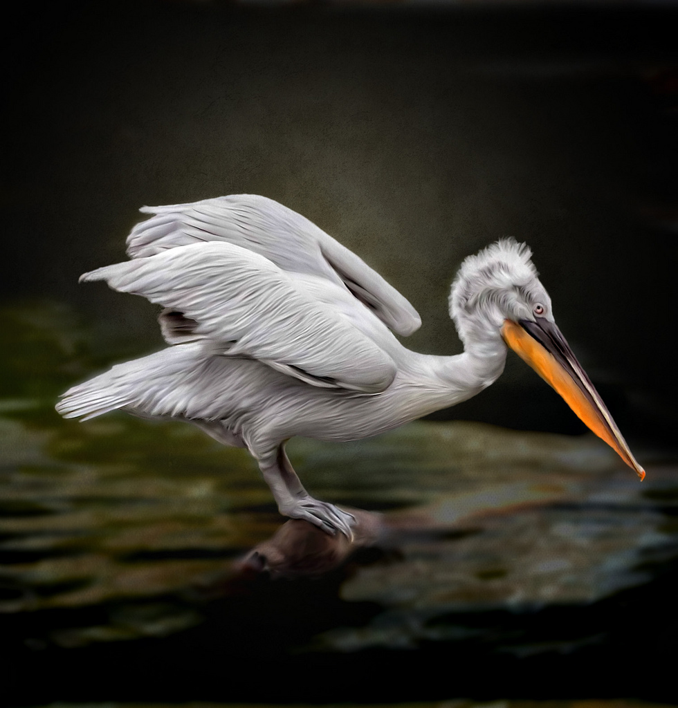 pelican, smudge, painting, photoshop