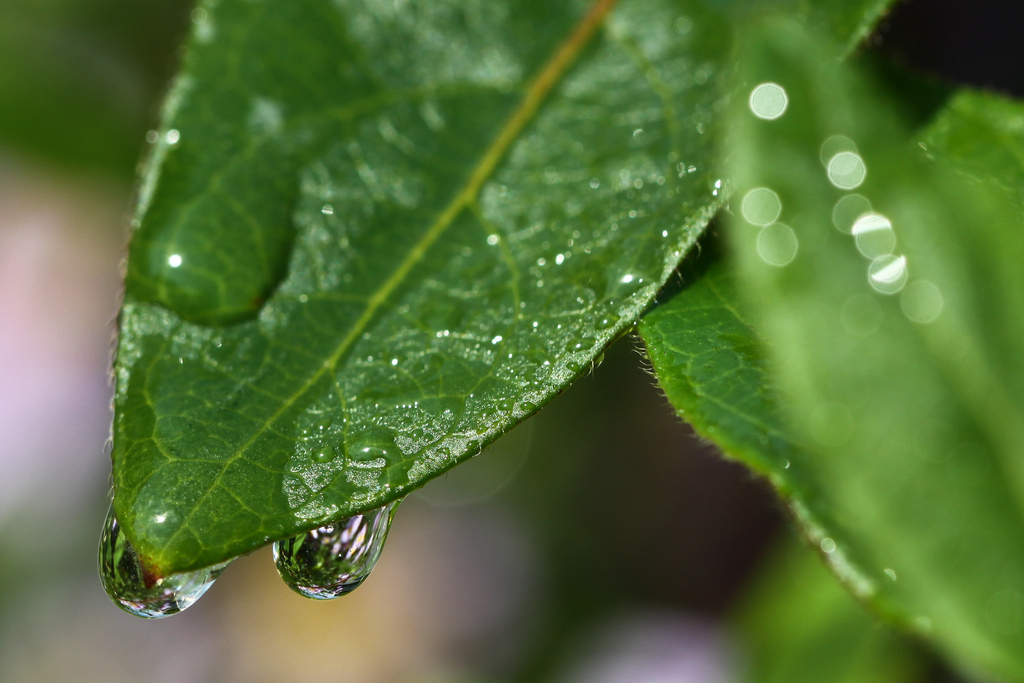 refraction, drop, dew drop, goutte