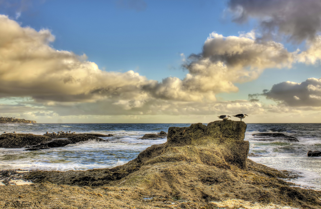 seascape, seagulls, rocks, clouds