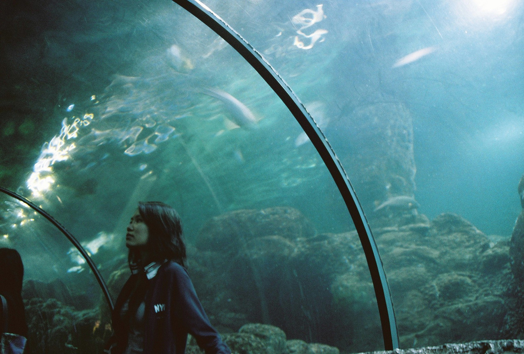 seaworld, aquarium, girl, film