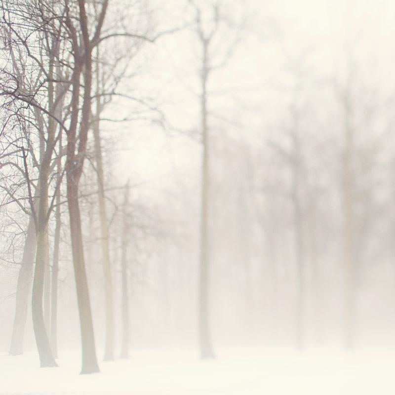 snow, fog, mist, trees