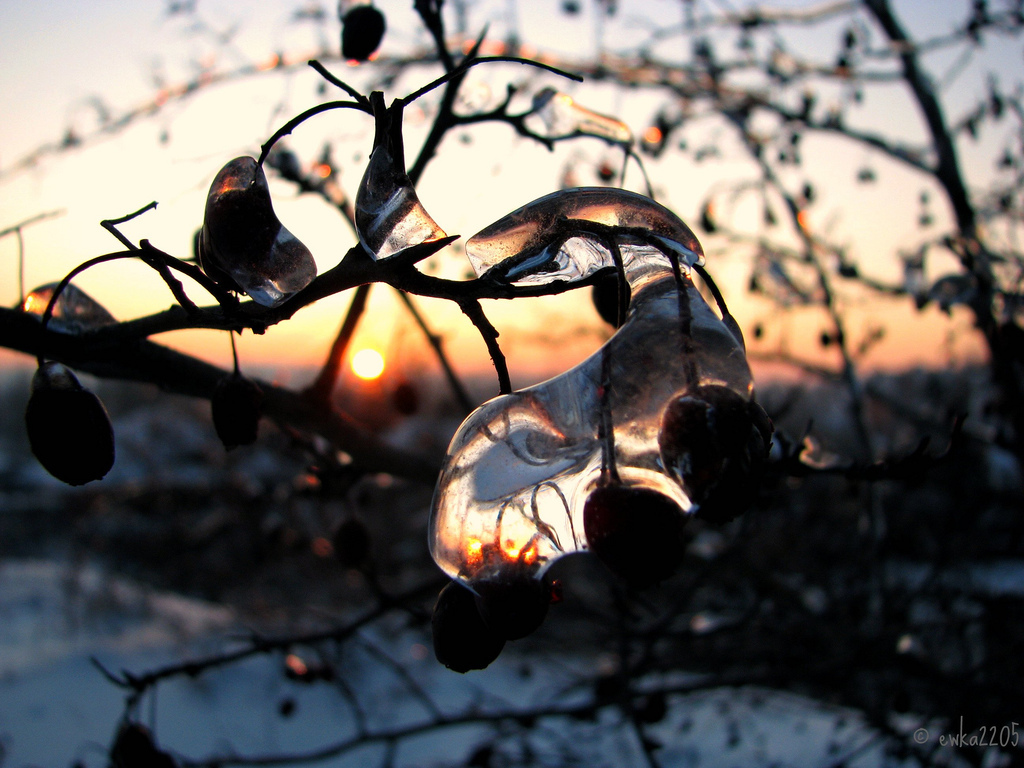 winter, frozen, wildberries, sunset