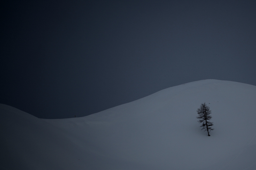 winter, tree, snow, dark
