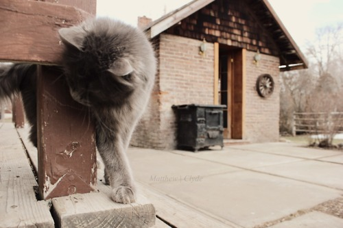 :), angle, animal, art, brick, cat, kitten, outside, photo, photography, proportion, shed, vintage