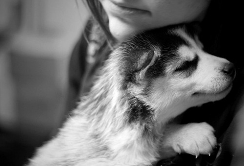 adorable, animal, baby, black and white, cuddle, cute, dog, love, owner, pet, puppy