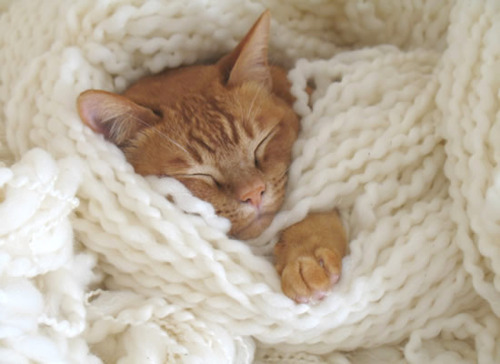 adorable, asleep, baby, bedroom, cat, cute, eyes, gorgeous, kitten, lovely, photography, sleep, sooo cute, sooooooooooooooooooo cute, sweet