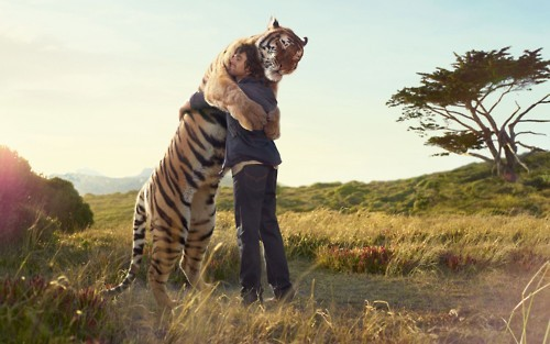 africa, cute, hug, love, nature, photography, tiger