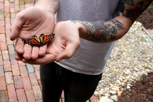 alternative, butterfly, cool, photography, tattoo