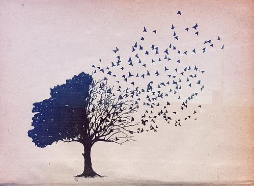 amazing, birds, butterfly, tree