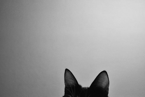 amazing, black and white, cat, cool