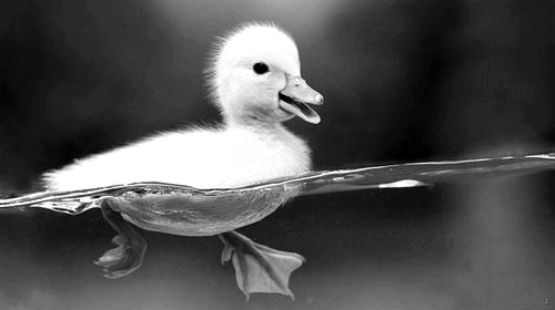 amazing, black and white, cool, cute
