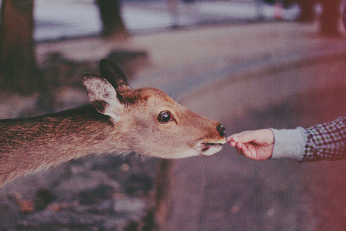 aminal, beautiful, cute, deer, forest, hand, hippie, indie, nature
