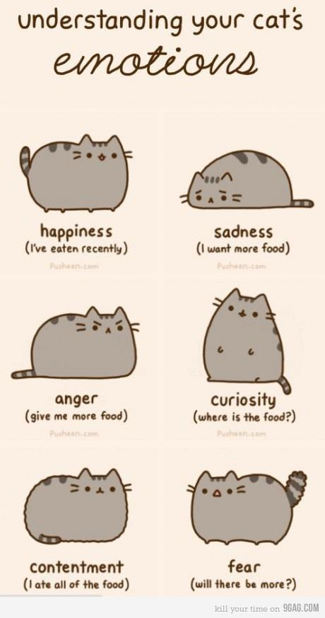 anger, cat, curious, eat