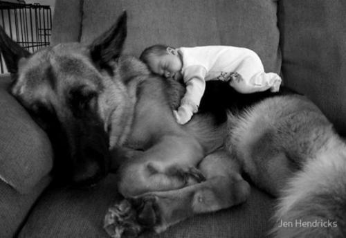 animal, art, baby, beutiful, cute, dog, little, nice, pretty, sleep, sweet