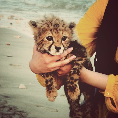 animal, baby, beach, beautiful