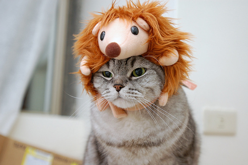animal, brown, cat, cute, cuteee, dressup, epic, eyes, funny, kawaii, lion, orange, pet, photography, plushy, stuffed animal, wildcat