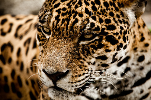 animal, cute, dope, fierce, photography