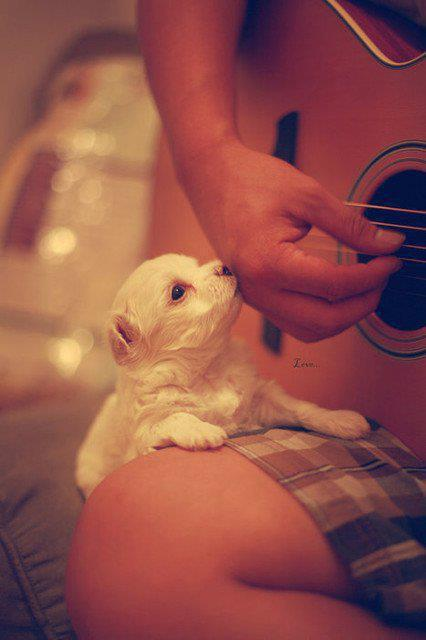 animal, cute puppy, dog, finger