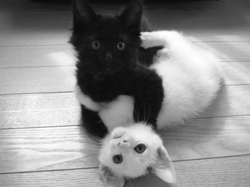 animals, b&amp;w, beautiful, black and white