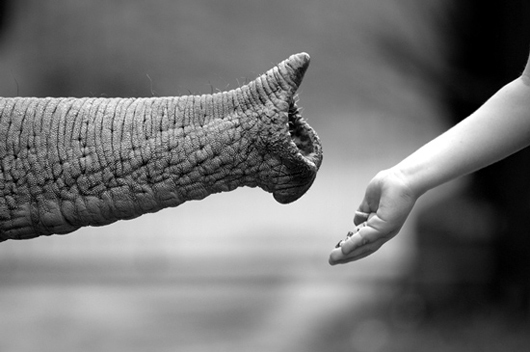 animals, bff, black and white, blanco y negro, couple, couples, elephant, friends, friendship, love, photography, views