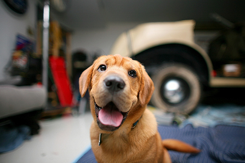 animals, cute, defocus, dog