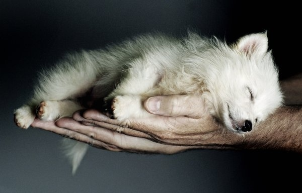 art, beautiful, couple, cute, dog, fashion, fluffy, hair, hands, love, pet, photography, pretty, puppy, sleep, white