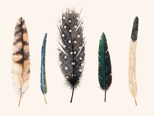 art, drawing, feathers